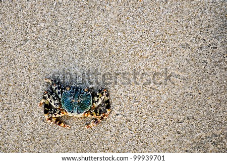 a colorful crab on a sandy beach in Asia - stock photo