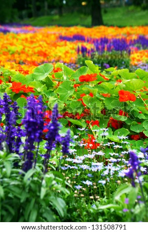a colorful flower bed  with different types of flowers - stock photo