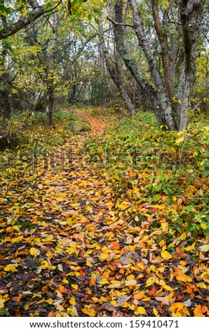 A colorful footpath at autumn in a swedish forest. - stock photo