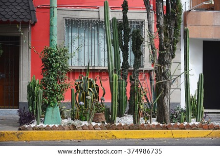 A colorful house in the Coyoacan neighborhood in Mexico City. Many cactuses are in the foreground.   - stock photo
