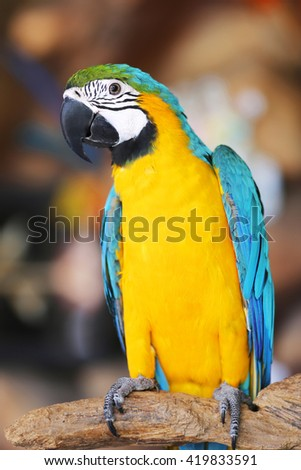 A Colorful macaw bird sitting on log - stock photo
