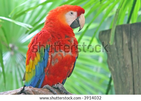 A colorful macaw perched on a branch