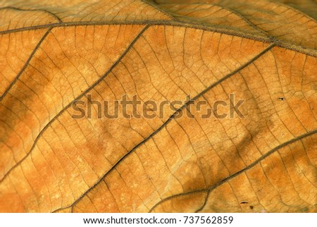 a colorful of textures and pattern of Dried leaves