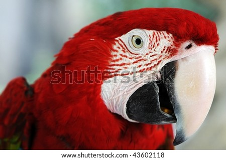 a colorful red macaw parrot sitting on a branch. - stock photo