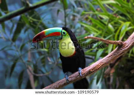 a colorful toucan perched on a branch - stock photo