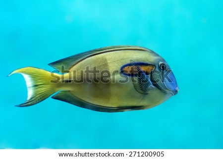 A colorful tropical fish. - stock photo