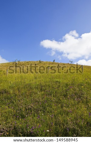 a colorful wildflower pasture with distant grazing sheep on a hill under a blue sky with white cloud in summer - stock photo