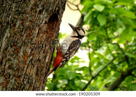 A colorful woodpecker on a textured tree, nursing its children - stock photo
