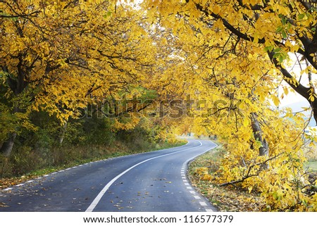 A colourful curving autumn road
