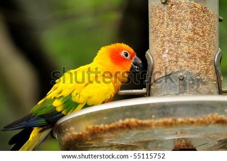A colourful hungry parrots having a meal - stock photo