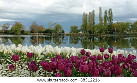 a colourful Tulip garden in the spring - stock photo