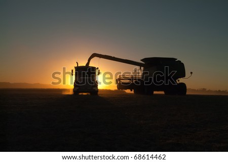 a combine dumps soybeans into a semi tractor-trailer at sundown - stock photo