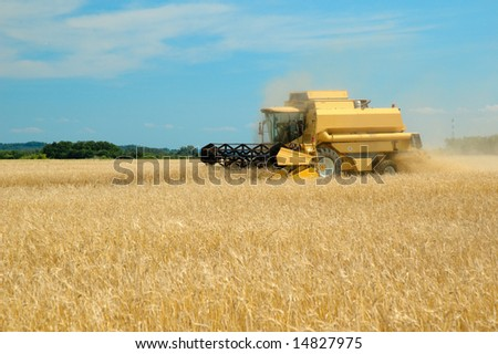 A combine harvester working in a wheat field, (focus on Tractor)