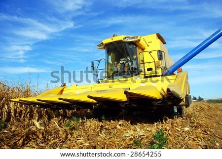 a Combine harvesting maize - stock photo