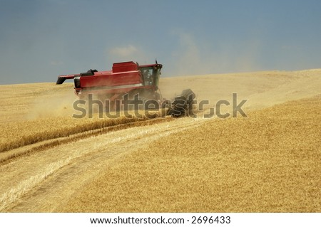a combine harvesting the wheat crops in the rolling hills of the Palouse area of southeastern Washington state, summer 2006 - stock photo