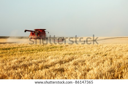 A combine harvests a ripe crop of wheat in the middle of a farm field.