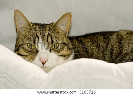 A comfortable cat looks at the viewer with suspicion - stock photo