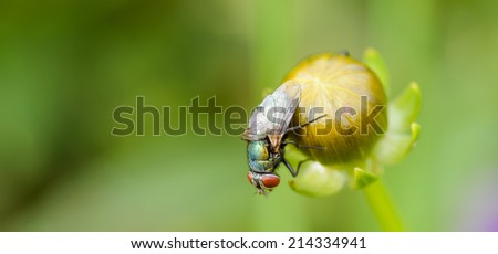 A common blue bottle on a flower bud - stock photo