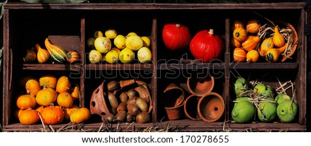 A composition of pumpkins and summer and winter squashes - stock photo