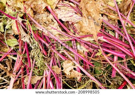 A compost heap with beet leaves in the organic vegetable garden De Groentenhof in Leidschendam, Netherlands. - stock photo