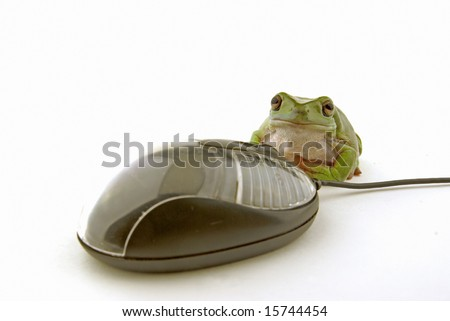 a computer mouse being used by a green frog - stock photo