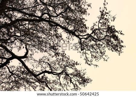 A concept photo of a lonely tree - lots of copyspace - stock photo