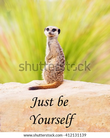 A concept picture of a meerkat saying that, whatever the circumstances, you should be yourself and not try and be something that you're not - stock photo