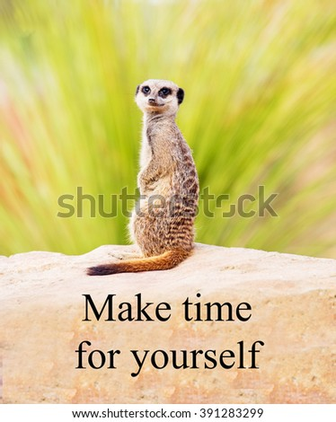 A concept picture of a meerkat telling you to 'Make time for yourself' - stock photo