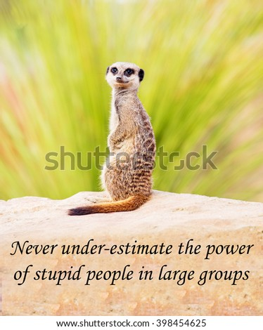 A concept picture of a meerkat warning you not to underestimate what a large group of people can achieve, even if they are wrong or don't understand - stock photo