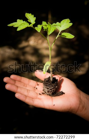 A conceptual image of a young hand holding a newly sprouted plant. - stock photo