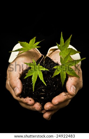 A conceptual shot of a businessman holding a new plant - stock photo