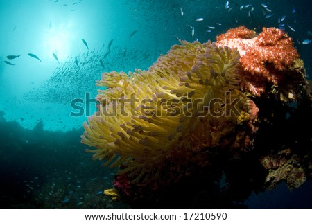 A coral encrustation with anemone, fish swarming and the sun breaking through the surface of the ocean. - stock photo