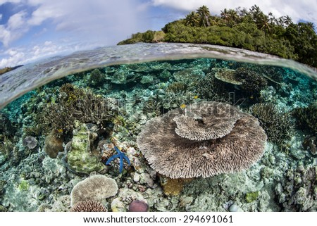 A coral reef grows in shallow water in the Solomon Islands. This Melanesian archipelago is one of the most biodiverse areas on Earth for marine organisms.  - stock photo