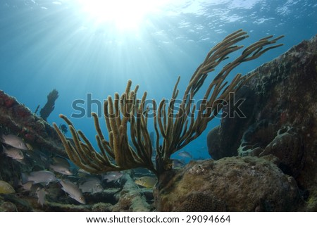 A coral reef seascape with fish seeking shelter under the burst of rays from the sun above the surface, with the calm waves seen in the background. - stock photo