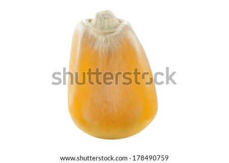 a corn seed on white - stock photo
