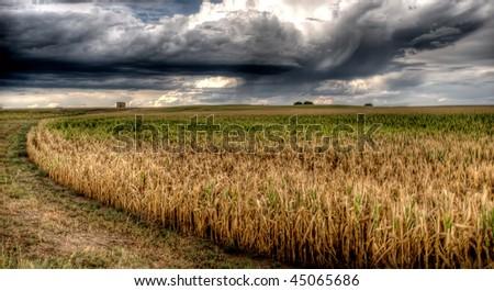 A cornfield before a heavy rain - stock photo