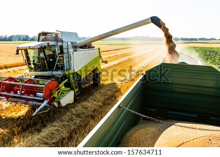 a cornfield with wheat at harvest. a combine harvester at work. - stock photo