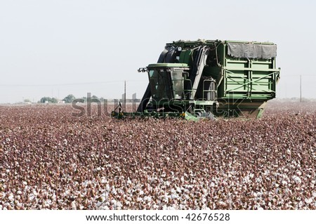 a cotton field is being picked during the fall harvest