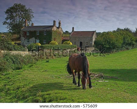 A country cottage and a horse
