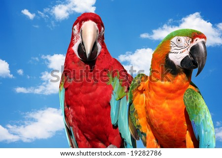 A couple of beautiful macaws with natural sky background