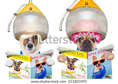 a couple of dogs looking at each other and spying,with envy,reading a magazine , isolated on white background - stock photo