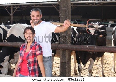 a couple of farmers behind cows - stock photo