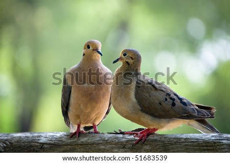 a couple of small birds , wild animals - stock photo