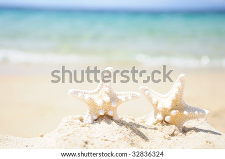 A couple of starfishes in the beach sand on a sunny summer day