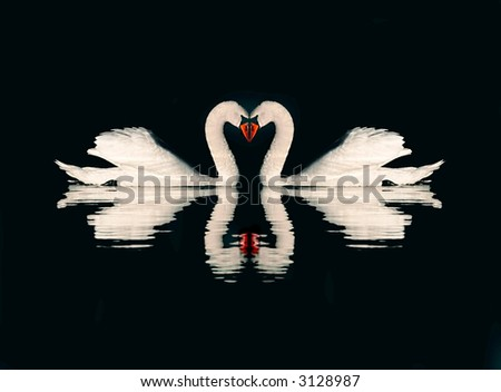 A couple of swans on black background - stock photo