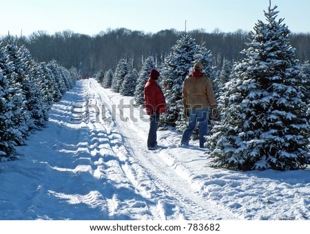 A couple picking out their Christmas tree - stock photo