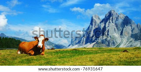 A cow and the Dolomites, Trentino-Alto Adigel, Italy
