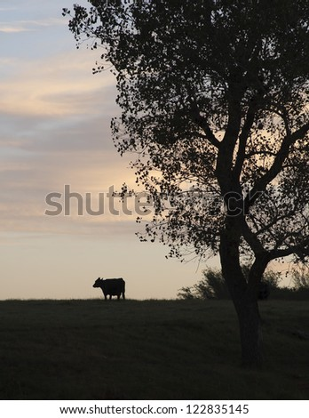 A cow and tree silhouetted against the sky at days end. - stock photo