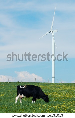 a cow eating near a windturbine - France - stock photo