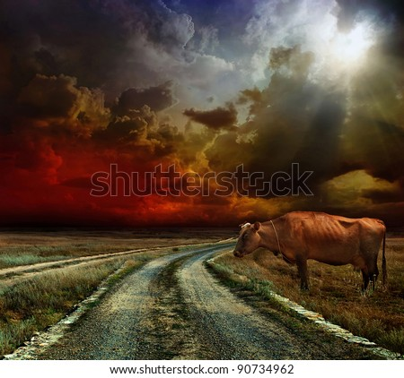 A cow on the field. before the Storm - stock photo